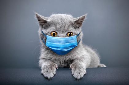 gato coronavirus