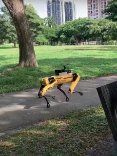 Robot Singapur