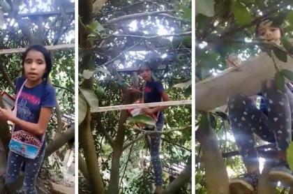 Niña en Norte de Santander toma clases en un árbol