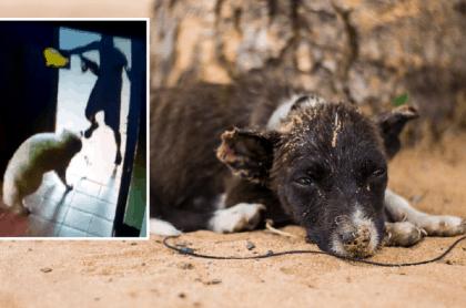 Perro maltratado en Chía / Imagen de referencia de un perro