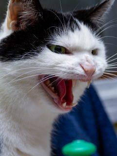 Gato impide robo