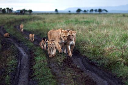 Actividad humana pone en peligro de extinción a vertebrados.