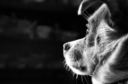 Perro fue agredido en Antioquia