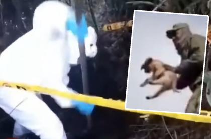 Soldado que lanzó perra tuvo que cavar su tumba