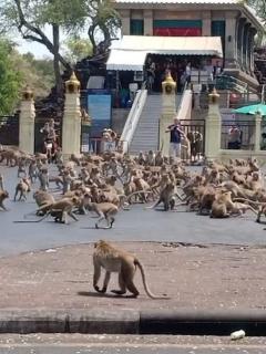Micos en Tailandia.