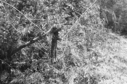 Asesinato de tigrillo