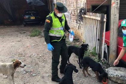 Investigan muerte de perro al parecer abusado en San Gil