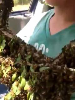 Padre e hijo rescatan enjambre de abejas