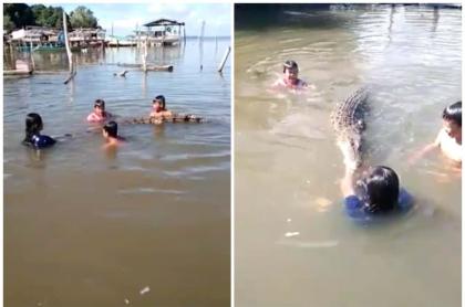 Niños nadan con un cocodrilo mientras su papá los graba.