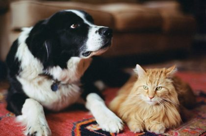 Proponen que mascotas tenga cédula