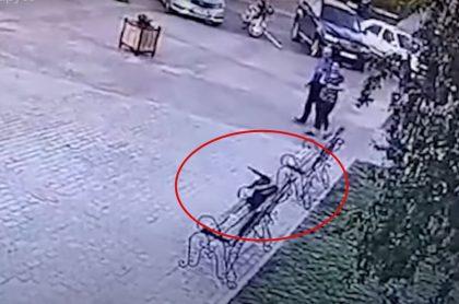 Video: cuervo roba dinero a delincuente