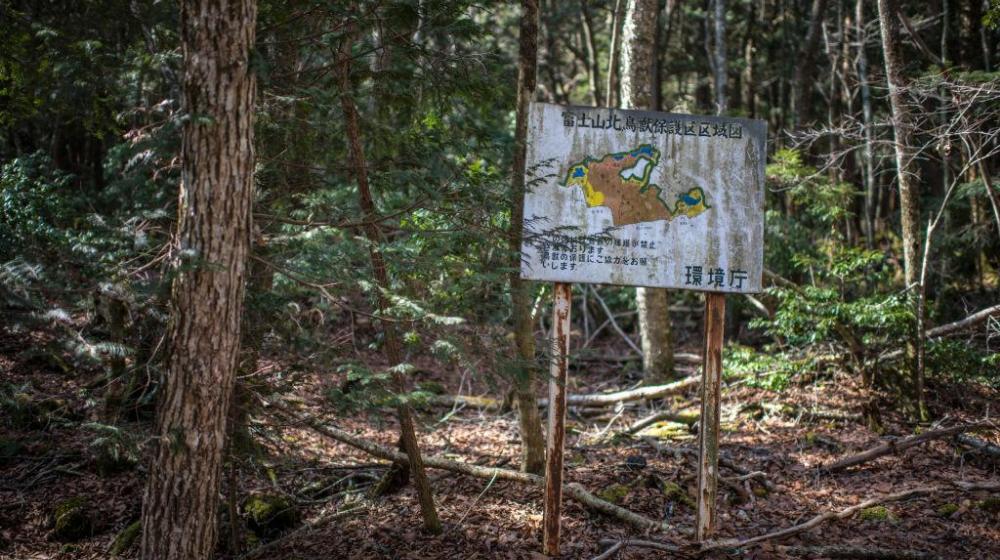 ¿Cuántas personas se suicidan en el bosque Aokigahara?