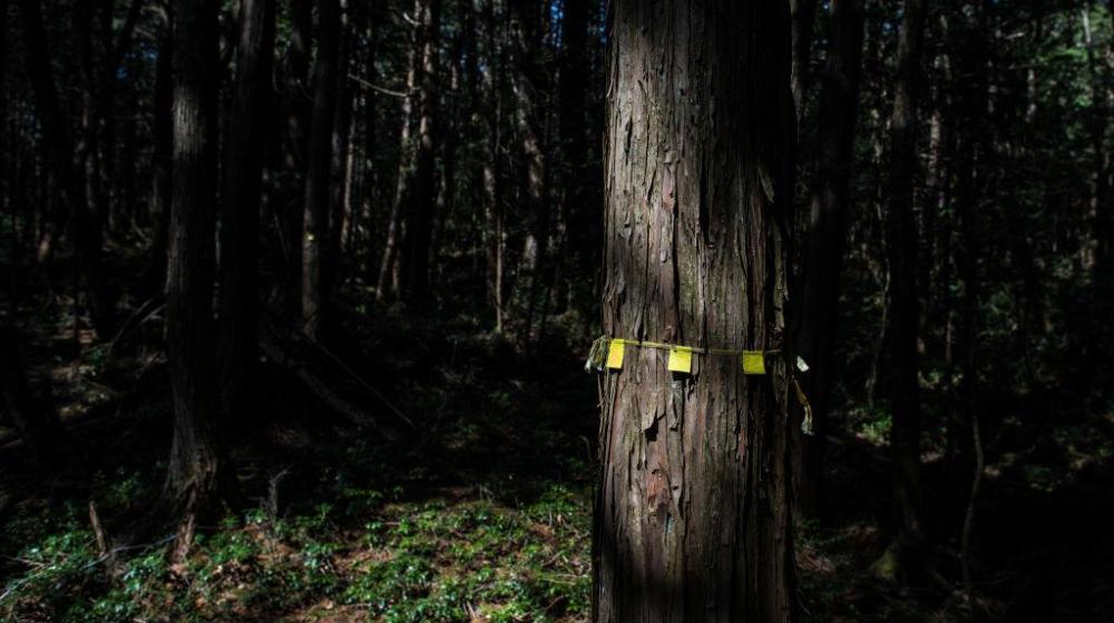 Santuarios en el bosque de los suicidios.