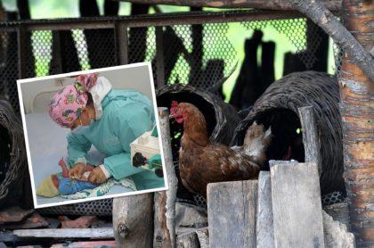 Por buscar una gallina perdida, niños encontraron bebé de 90 minutos de nacido abandonado