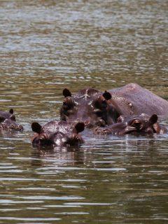 Parque Hacienda Nápoles: con hipopótamos listos para abrir tras cinco meses de cierre
