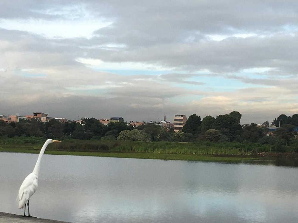 Humedal Santa María del Lago, en Bogotá.