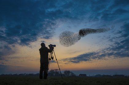 Aves migratorias.