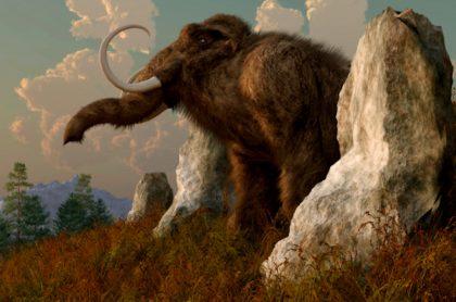 Mineros de oro hallan restos de mastodonte de 10.000 años.