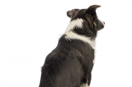 Imagen de un perro, que ilustra al que murióen medio de pelea de dos recicladores enBogotá