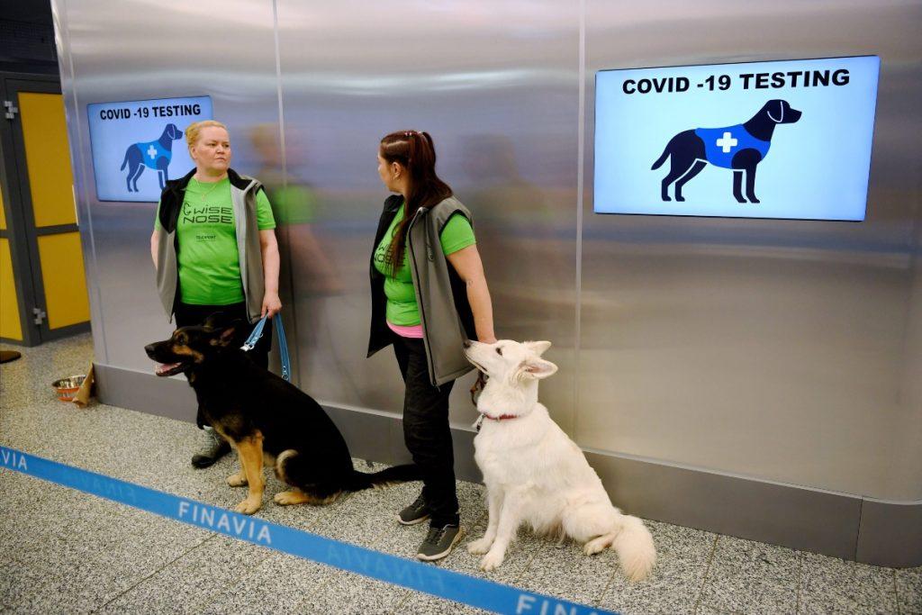 En el aeropuerto de Helsinki, Finlandia, ya están usando perros para detectar personas con coronavirus. / AFP.