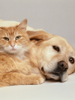 Foto de perro y gato ilustra nota sobre el 'Sisbén' que tendrán las mascotas de familias pobres en Pereira.