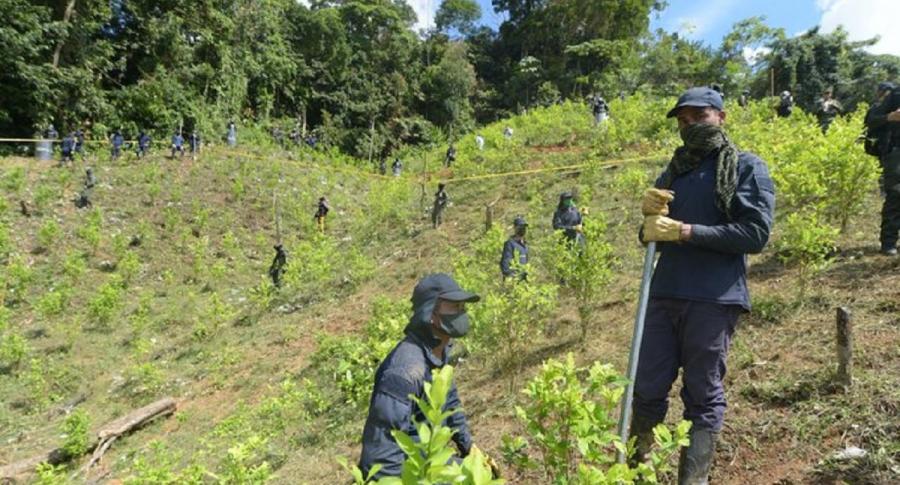 Erradicadores manuales de coca.
