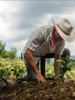 Imagen que ilustra denuncia de campesinos por ayudas del Gobierno para cultivos en la Sierra Nevada de Santa Marta