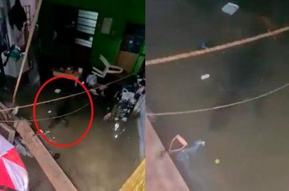 Capturas de pantalla de cocodrilo nadando en sala de casa de familia mexicana
