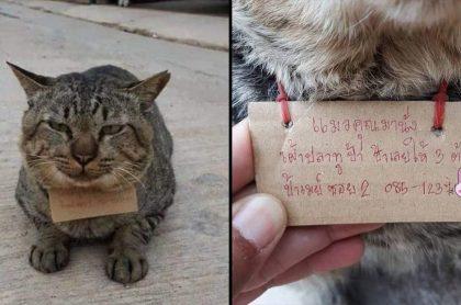 Gato que se fue de la casa y volvió 3 días después endeudado