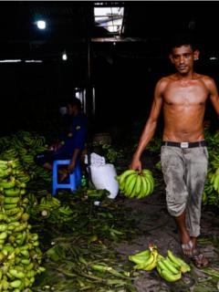 Cultivadores de papa y plátano piden ayuda al Gobierno Nacional. No aguantan más la crisis.