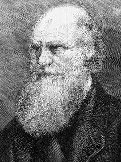 Ilustración de Charles Darwin
