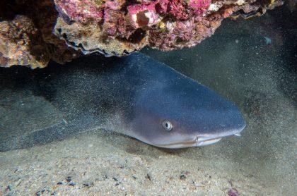 El presidente Iván Duque anunció la prohibición total de la caza de tiburones en Colombia.