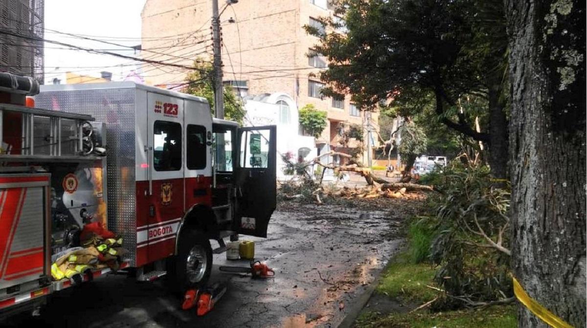 Lluvias en Bogotá: Bomberos cortan árboles que pueden caerse