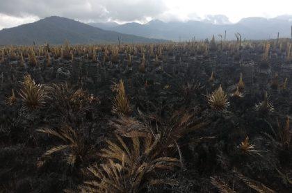 Imagen del páramo arrasado por el fuego, en Nariño.