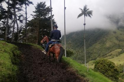 Turista cabalga por una trocha en el valle del Cocora