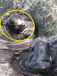 Lucio, el perro enterrado vivo en Flandes, Tolima