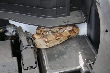 Serpiente que apareció en un carro, en Bogotá.