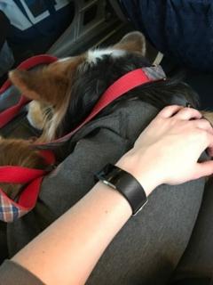 Perro viaja dentro de avión, ilustra nota de American Airlines ya no permitirá viajar con animales de compañía