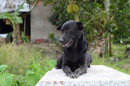 Mino , perra que no abandona tumba de su amo, niño de 2 años que murió ahogado