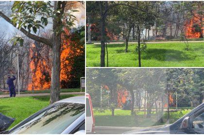 Imágenes del incendio en el norte de Bogotá.