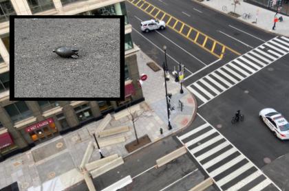 Supuesto explosivo cerca de Casa Blanca, era objeto de limpieza
