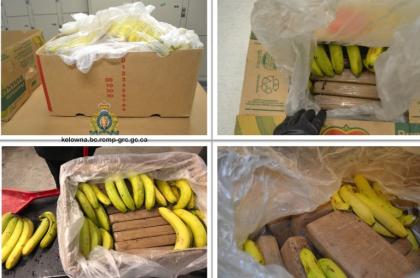 Cajas de banano en las que había cocaína: fueron encontradas en Canadá y provenían de Colombia