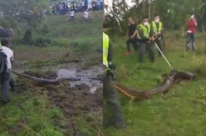 Fotos de la anaconda que atraparon cerca de un hotel en Puerto López, Meta