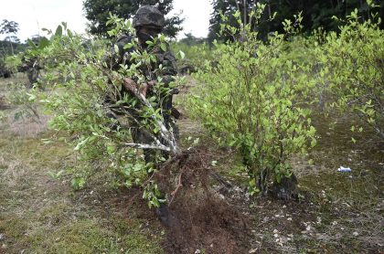Denuncian 'falsos positivos' en erradicación de cultivos de coca