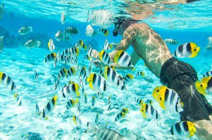 Hombre hace snorkeling, ilustra nota de Foto que revela últimos momentos con vida de hombre devorado por tiburón