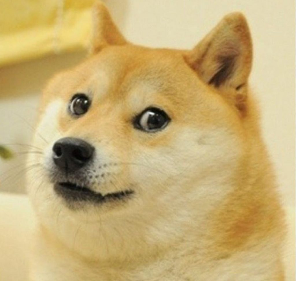 Doge, Know Your Meme