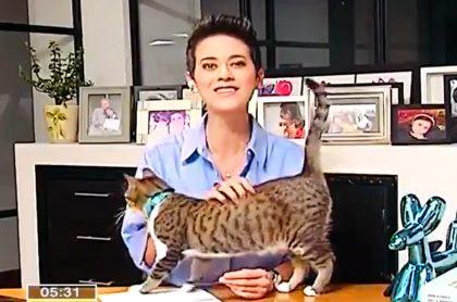 Sandra Vélez tuvo problemas con su gato en durante emisión en vivo en City TV.