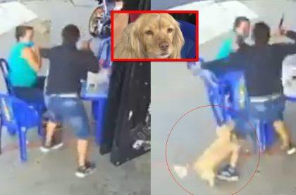 Perro evitó robo a sus dueñas en una calle de Bucaramanga.