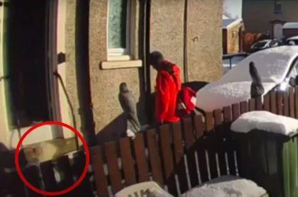 Captura de pantalla de video viral de cartero que dejó tirada en la nieve a anciana que pedía ayuda