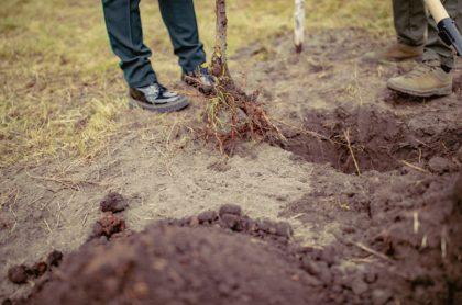 Hombre sostiene pala sobre huerta, ilustra nota de hombre que golpeó con un martillo y enterró vivo a su papá en Siberia, Rusia